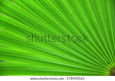 Green palm leaf closeup background - stock photo