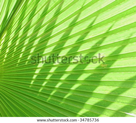 green palm leaf texture - stock photo