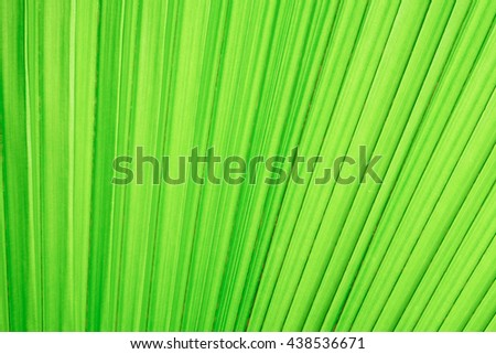 Green palm leaves background.