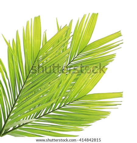 Green palm leaves frame isolated on white background