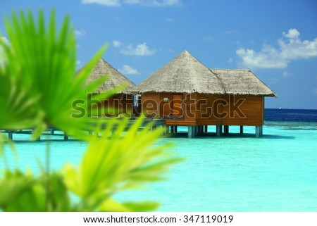 Green palm leaves on sea background