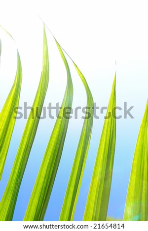 Green palm leaves under sunlight