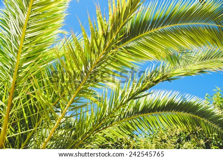 Green palm leaves with blue clear sky - stock photo