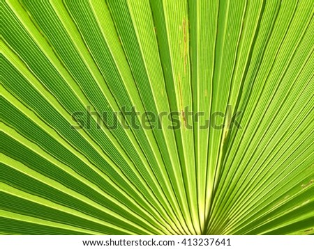 Green palm leaves with sunlight background