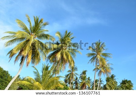 Green palm's leaves on the beach