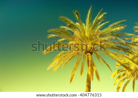 Green palm tree against sunny blue sky. Summer holidays background. Vintage style toned picture - stock photo