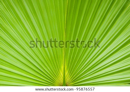 Green palm tree leaf as background - stock photo