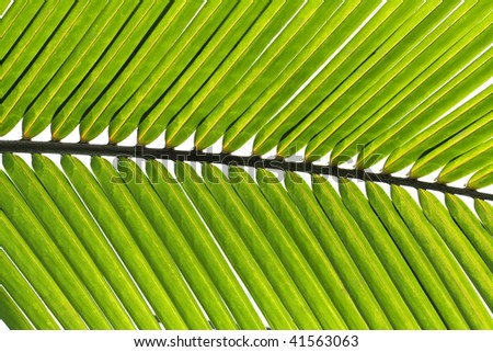 Green palm tree leaf close-up - stock photo