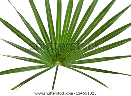 Green palm tree leaf isolated on white background - stock photo