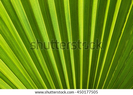 Green palm tree leaf surface texture background