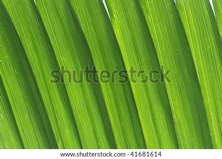 Green palm tree leaf texture of Seychelles islands close-up - stock photo