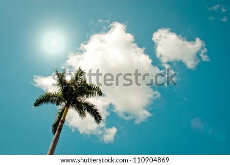 Green palm tree on blue sky background - stock photo