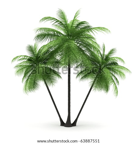 Green palms on a white background. 3d image. - stock photo