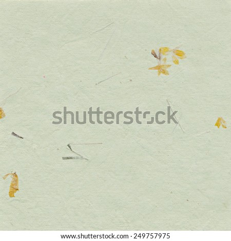 Green paper background with dried plants - stock photo