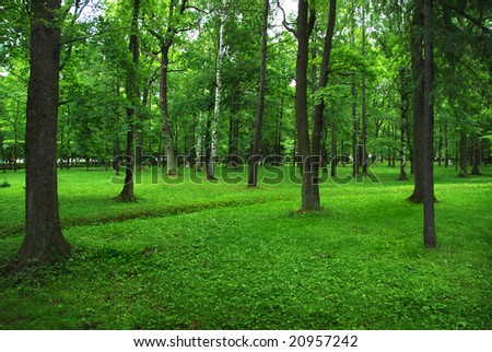 Green park - stock photo
