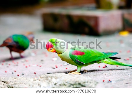 Green Parrot in thailand zoo. - stock photo