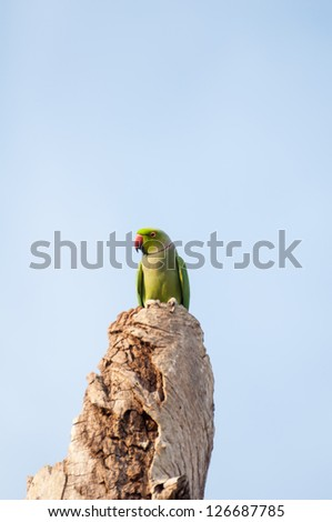 Green parrot perched on a old tree trunk with blue sky background - stock photo