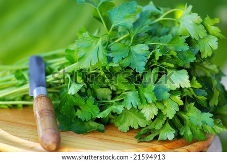 Green  parsley and knife.