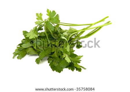 Green parsley isolated on white - stock photo