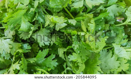 Green parsley leafs - stock photo