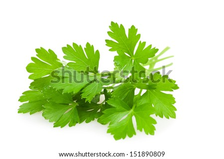green parsley leaves   isolated on white background  - stock photo
