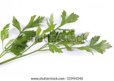 green parsley on a white background