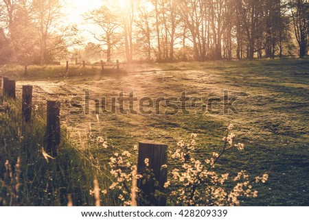 green pasture in the morning light / morning light - stock photo