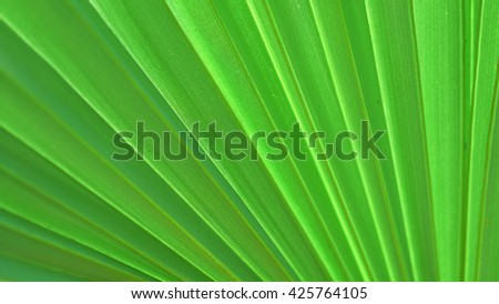 Green patterned background.