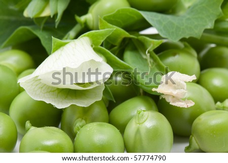 Green pea with blossom - stock photo