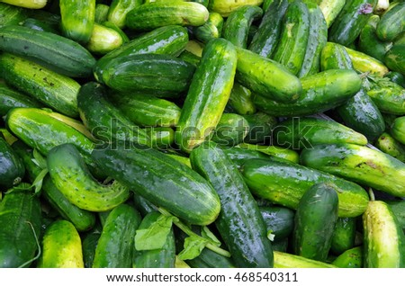 Green pickling cucumbers piled for farmers market display