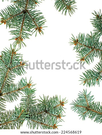 Green pine branches isolated christmas background