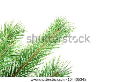 Green pine tree corner branch isolated on the white - stock photo