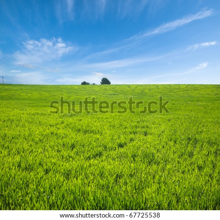 green plain and fluffy clouds in the blue sky - stock photo