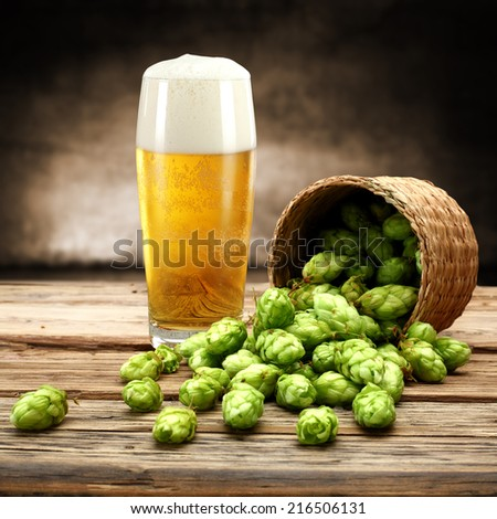 green plant and beer  - stock photo