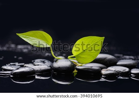 Green plant and therapy stones  - stock photo