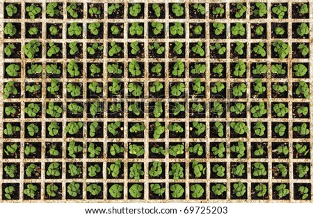 Green plant background. young herbs - stock photo