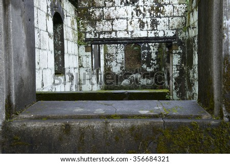 Green plant  behind  the ruin  window - stock photo
