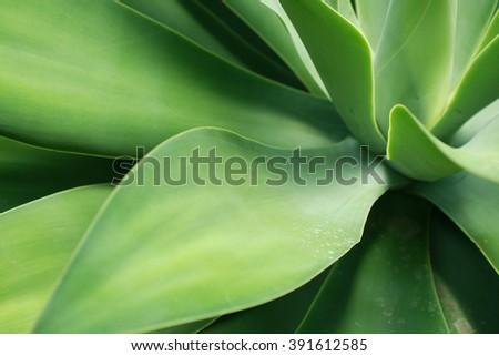Green plant detail - stock photo