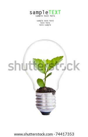 Green plant grow up in light bulb
