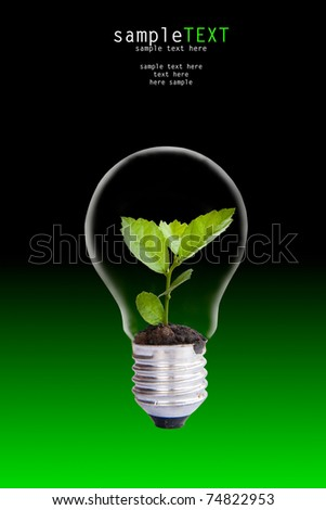 Green plant grow up through light bulb