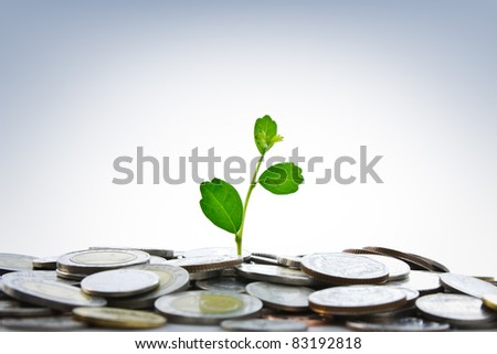 Green plant growing from coins - stock photo