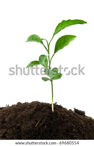 green plant growing from soil on a white background