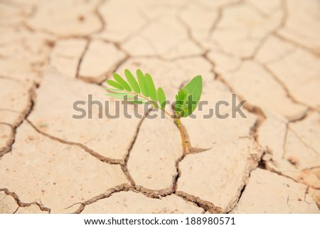 Green plant growing on the dry dead soil