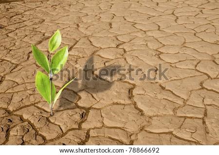 Green plant growing on the dry dead soil land in desert - stock photo