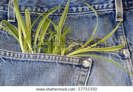 Green plant growing out of jeans pocket - stock photo