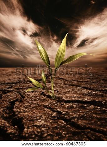 Green plant growing through dead soil - stock photo