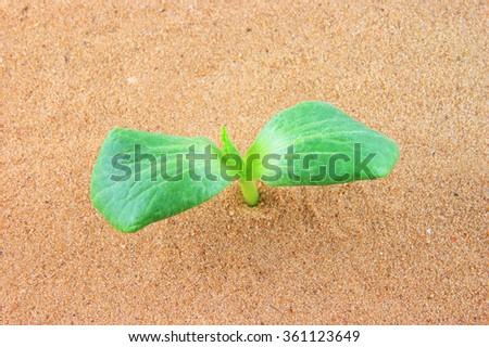 Green plant growing through sand - stock photo