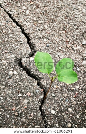 Green plant growing trough cracked ground - stock photo