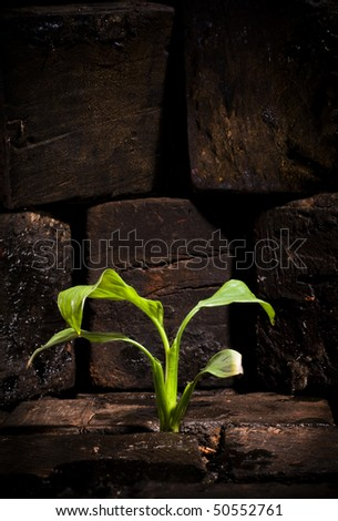 Green plant growing trough dead ground - stock photo
