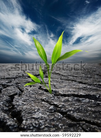 Green plant growing trough dead soil - stock photo